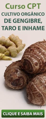 Curso CPT Cultivo Orgânico de Gengibre, Taro e Inhame. Clique aqui e conheça!