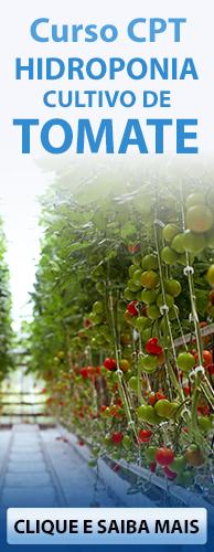 Curso CPT Hidroponia Cultivo de Tomate. Clique aqui e conheça!