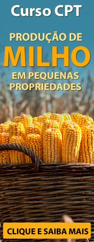 Curso CPT Produção de Milho em Pequenas Propriedades. Clique aqui e conheça!
