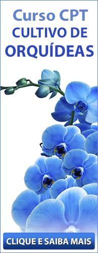 Curso CPT Cultivo de Orquídeas para Fins Comerciais ou Hobby. Clique aqui e conheça!
