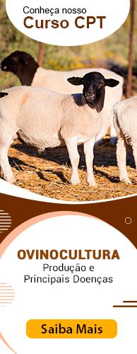 Curso CPT Ovinocultura - Produção e Principais Doenças. Clique aqui e conheça!