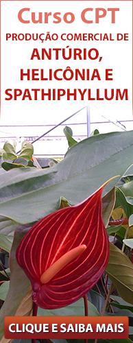 Curso CPT Produção Comercial de Antúrio, Helicônia e Spathiphyllum. Clique aqui e conheça!