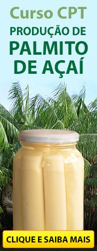 Curso CPT Produção de Palmito de Açaí. Clique aqui e conheça!