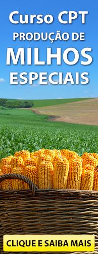 Curso CPT Produção de Milhos Especiais. Clique aqui e conheça!