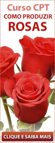 Curso CPT Como Produzir Rosas. Clique aqui e conheça!