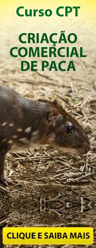 Curso CPT Criação Comercial de Paca. Clique aqui e conheça!