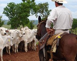 Curso Profissionalizante Online de Administrador de Fazendas de Gado de Corte