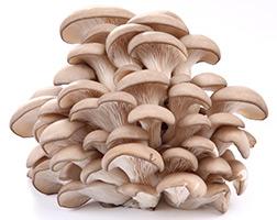 Curso Profissionalizante de Cogumelos Comestíveis