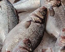 Curso Profissionalizante de Processador de Carne de Peixes