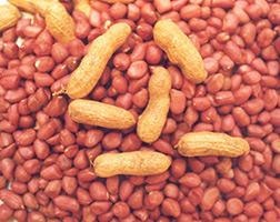 Curso Profissionalizante Online de Produtor de Amendoim