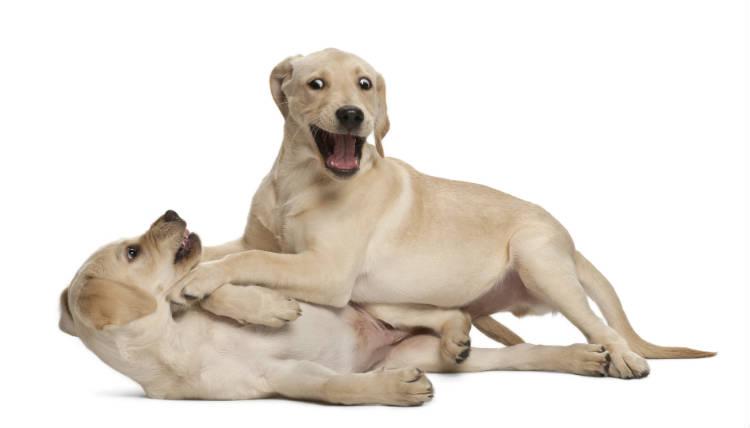 Como impulsionar seu e-commerce de produtos para pets