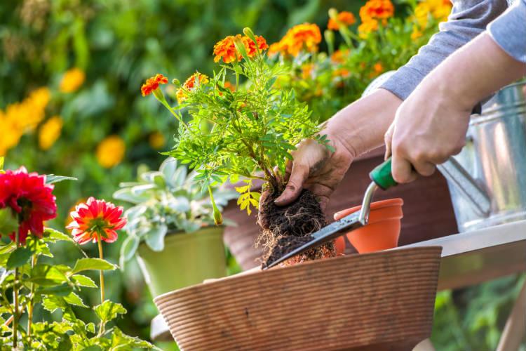 Ganhe dinheiro com serviços de jardinagem