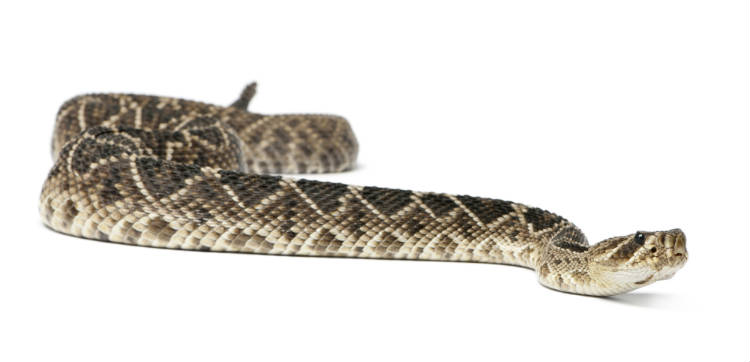 Dicas para ser dono de criação de cobras
