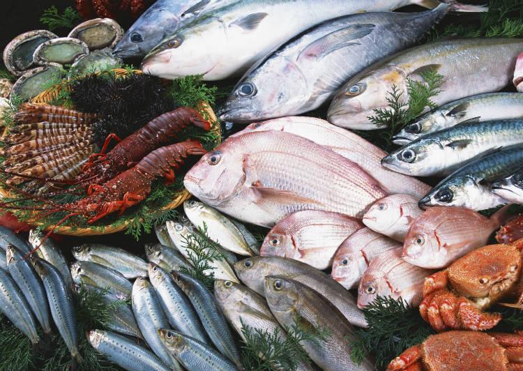 Dicas para montar indústria de derivados de pescado