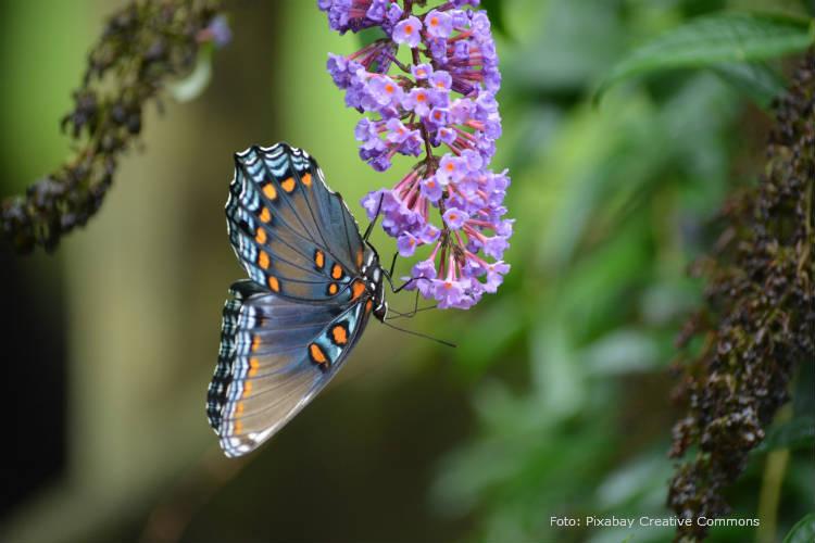 Dicas simples para iniciar um borboletário