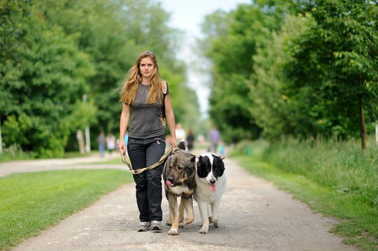 Dogwalkers: passeie com cachorros e ganhe dinheiro!