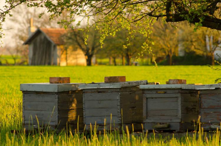 Fábrica de mel: etapas do processamento