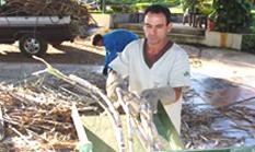 5cb4908f7232b As atividades agrícolas englobam desde a produção de gênero alimentício até  a produção de matéria-prima para as indústrias, além da exploração agrícola.