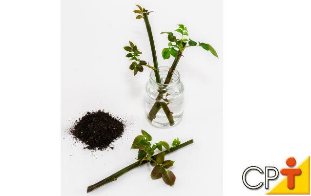 Porta-enxerto de rosas: aprenda a fazer e comercialize!   Artigos Cursos CPT