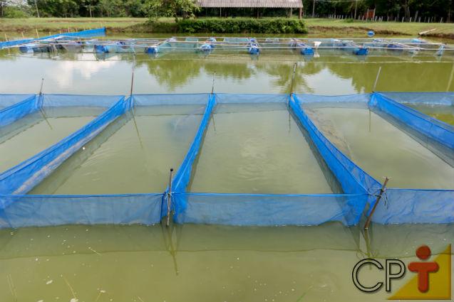 Por que é vantajoso criar tilápias em tanques-rede?   Artigos Cursos CPT