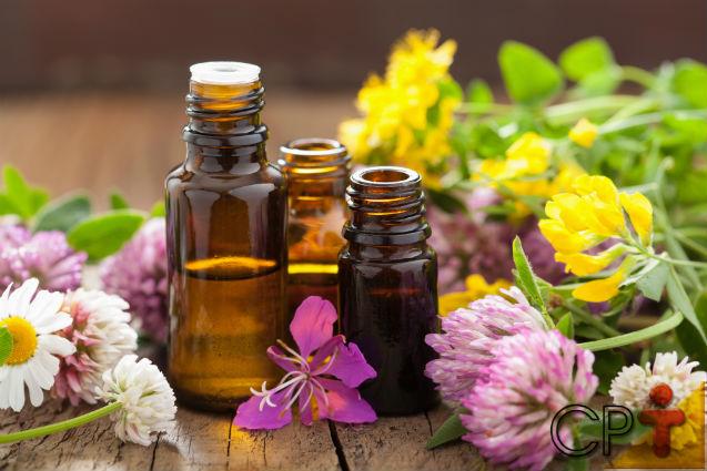 Você acredita no poder curativo dos florais?   Artigos Cursos CPT
