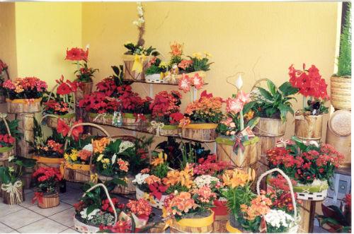 Resultado Da Busca Para Nomes Para Floricultura Emprego E Renda