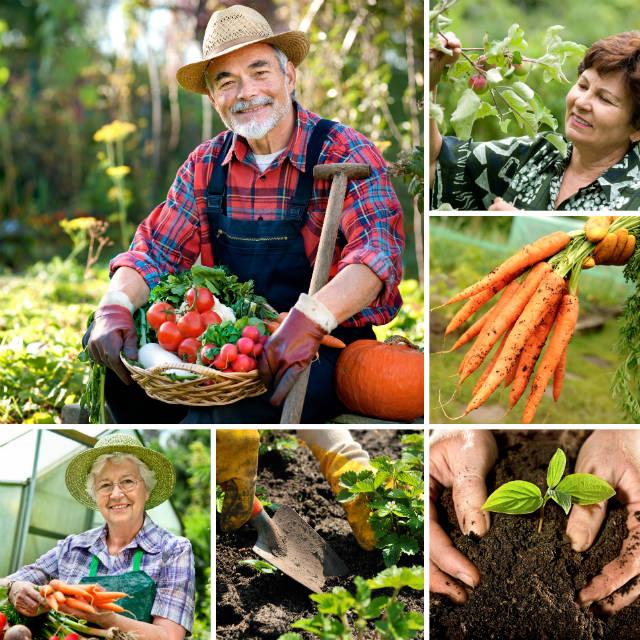 Vantagens da agricultura orgânica