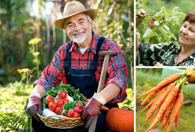 Agricultores familiares aumentam rentabilidade com assistência técnica
