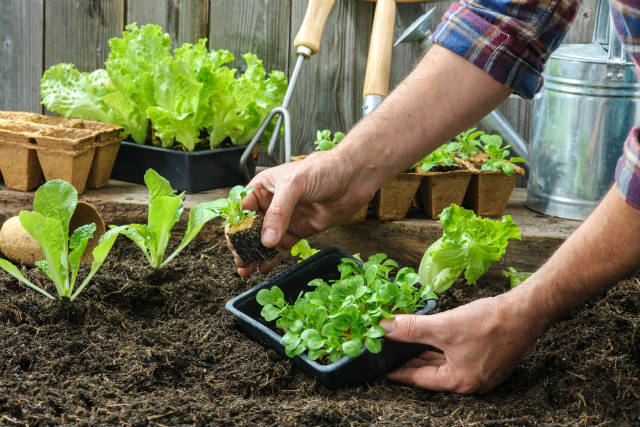Agricultores lucram com minivegetais