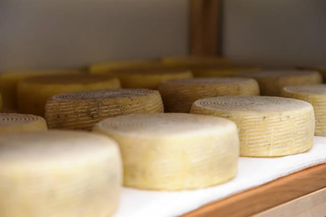 Regularização de produtores de queijo minas artesanal