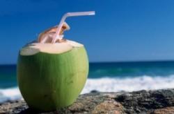 Como cultivar coco organicamente