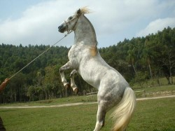 Treinamento de cavalo sendo executado