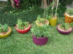 Cultivo de plantas com fins medicinais