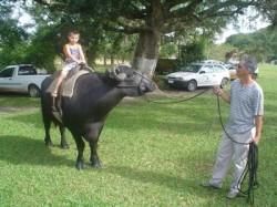 Passeio em búfalo