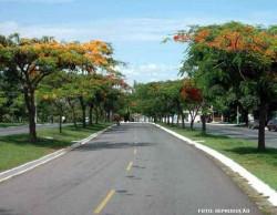 Arborização urbana: garantia de qualidade de vida nas cidades