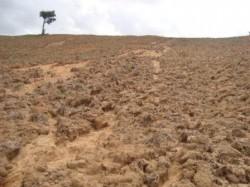 Conservação do solo: manejo adequado garante produção e economia