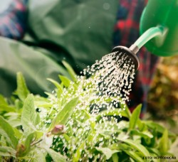 Jardinagem: postura do profissional para atuar na área