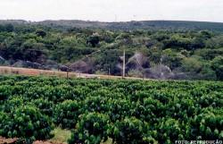 Irrigação: manejo adequado para o sucesso no empreendimento