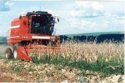 Máquinas agrícolas: aumento da produtividade e da eficiência dos trabalhos agrícolas