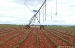Conheça mais sobre os principais sistemas de irrigação