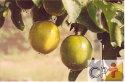 Cultivo do maracujá
