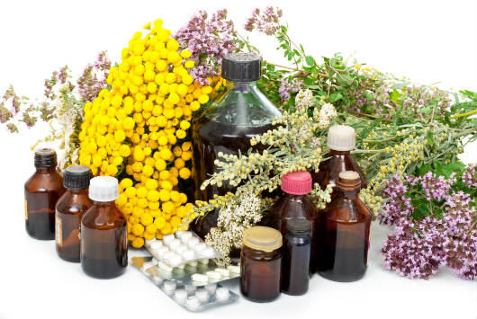 Plantas medicinais e seu poder de cura
