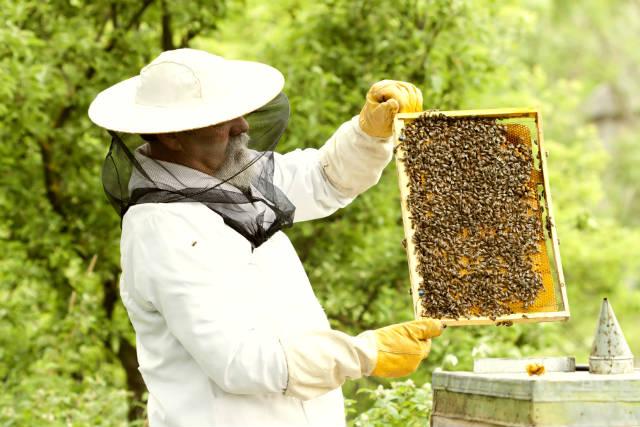 Dicas sobre manejo do apiário