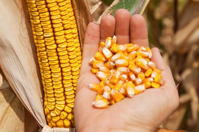 Porto brasileiro bate recorde de exportação de grãos