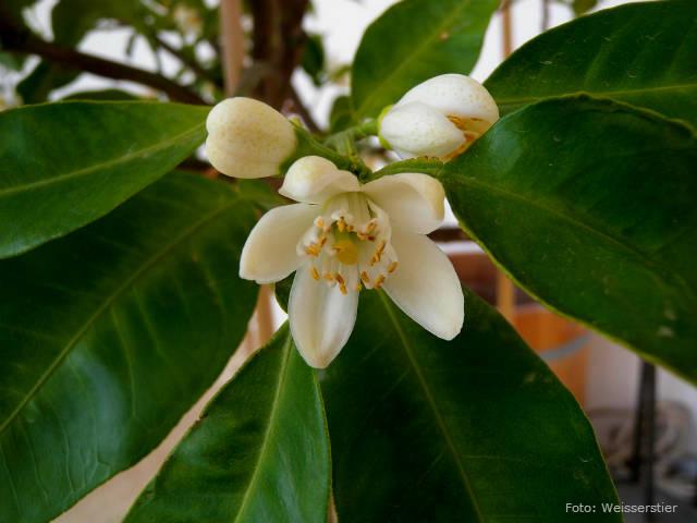 Farmácia viva - hortaliças, frutas e ervas aromáticas curam!
