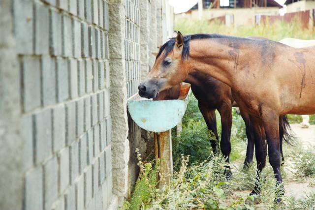 Dicas de alimentação para cavalos de vaquejada