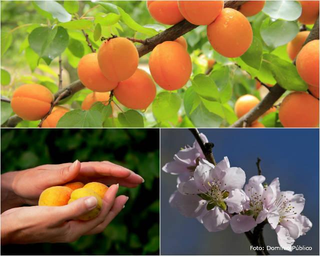 Métodos e dicas para fazer e plantar mudas de pêssego