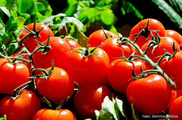 Ótimas dicas para plantar tomate
