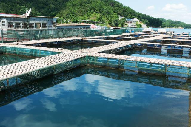 Peixes são monitorados para controle sanitário