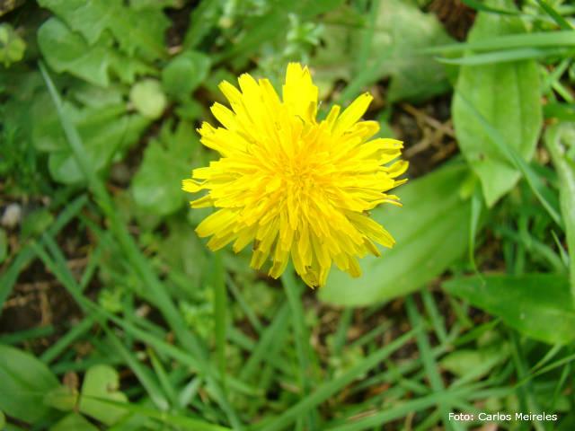 Horticultura - você sabe o que são pancs?